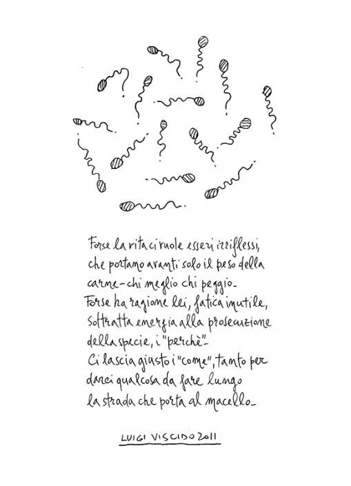 Luigi Viscido - Nell'anorma: Esseri irriflessi
